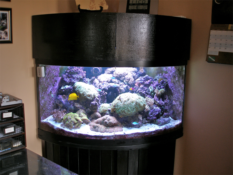 Untitled document for Corner fish tank for sale
