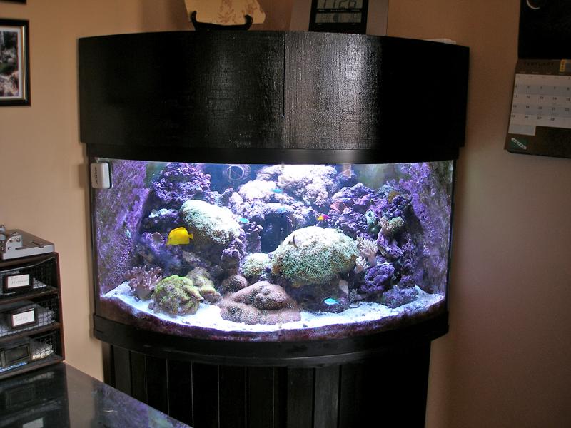 Curved Corner Aquarium - Best Accent Chairs and Aquarium ...